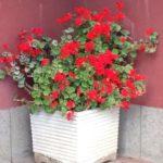 Kappa Equestre decorazione floreale